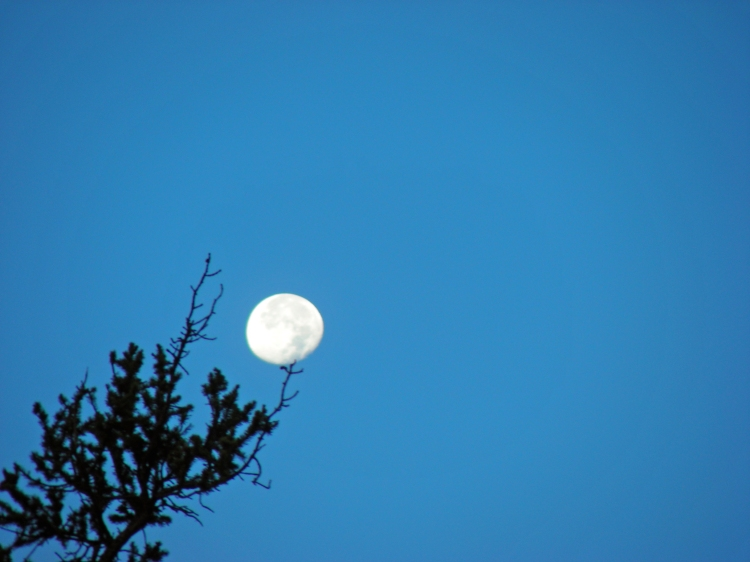 The moon was still out in the morning...