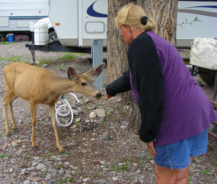 This local visitor came for dinner, and Norm tried to force feed her a type of grass she didn't like. She ate every other green thing in the area, except the stuff Norm had. She did give Norm some deer slobber...