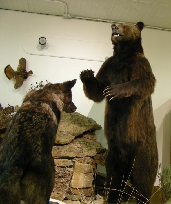One big Grizz... see below...