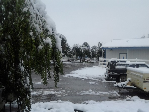 Tree branches were broken all over this RV park...
