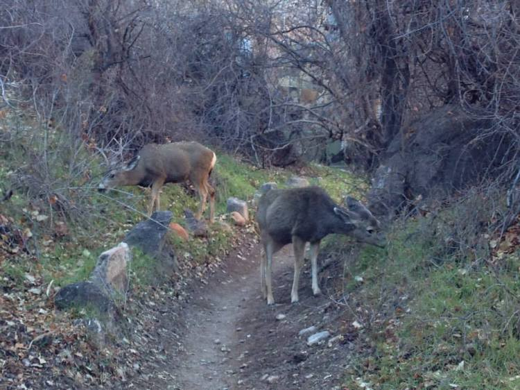 Wild life in the canyon...